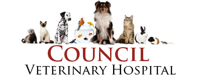 Council Veterinary Hospital